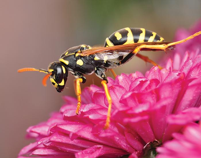 hornet-ecotech-pest-control
