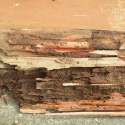 termite-damage-ecotech-pest-control