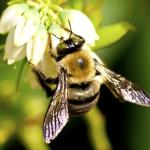 Bumble Bees Ecotech