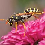 Hornet EcoTech Pest Control