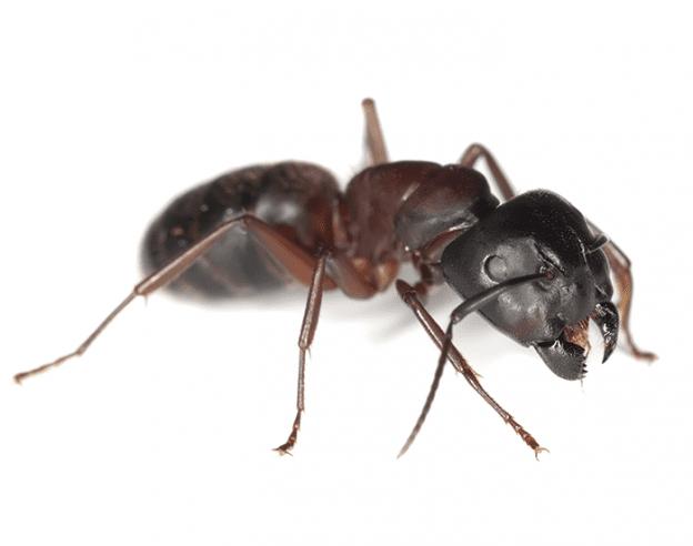 bug off exterminators comprehensive problem