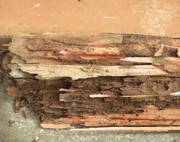 Termite Damage EcoTech Pest Control