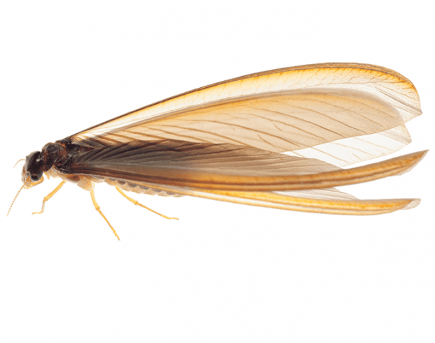 Termites EcoTech Pest Control