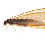 Termite EcoTech Pest Control