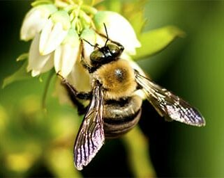 Long Island Bee Exterminators
