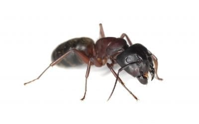 close up view of Ant