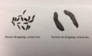 mice + rat droppings